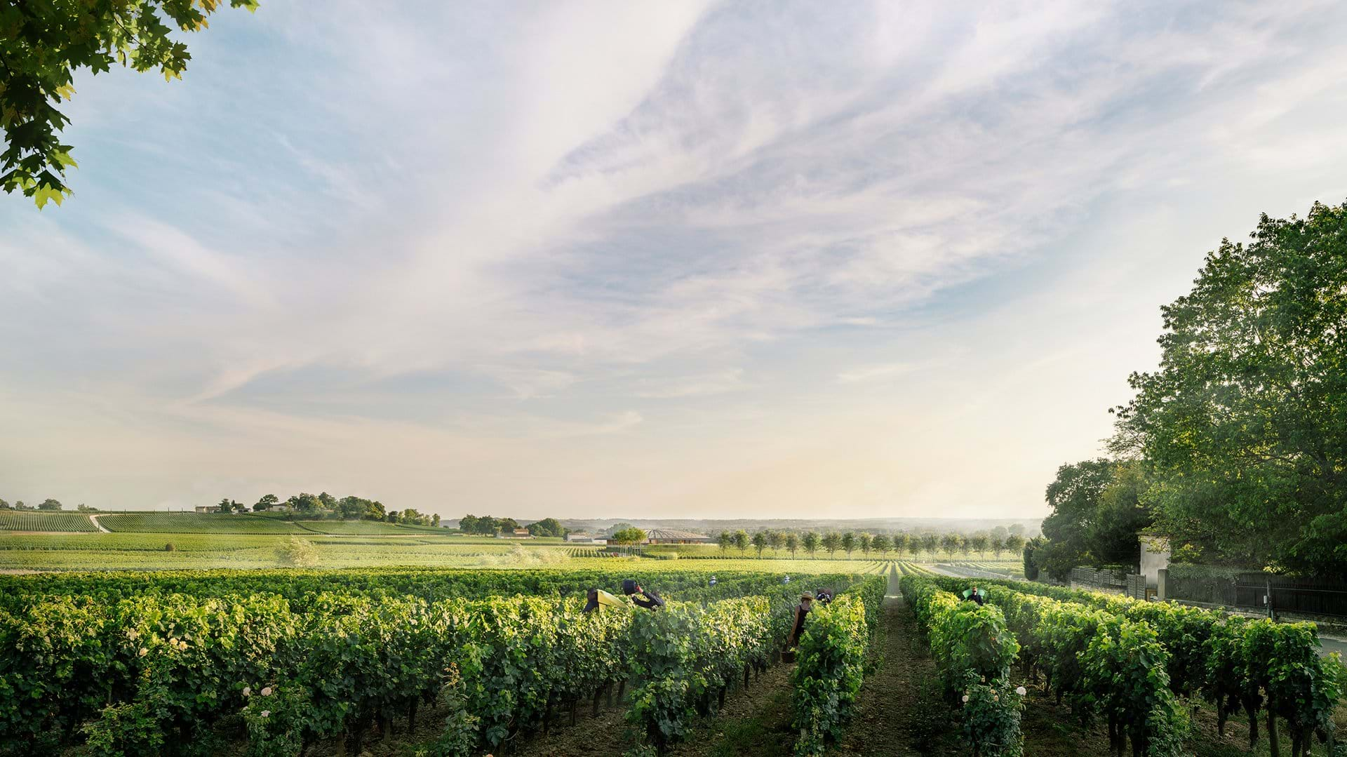 Foster + Partners reveals its vision for the Le Dôme winery in Saint-Émilion_3