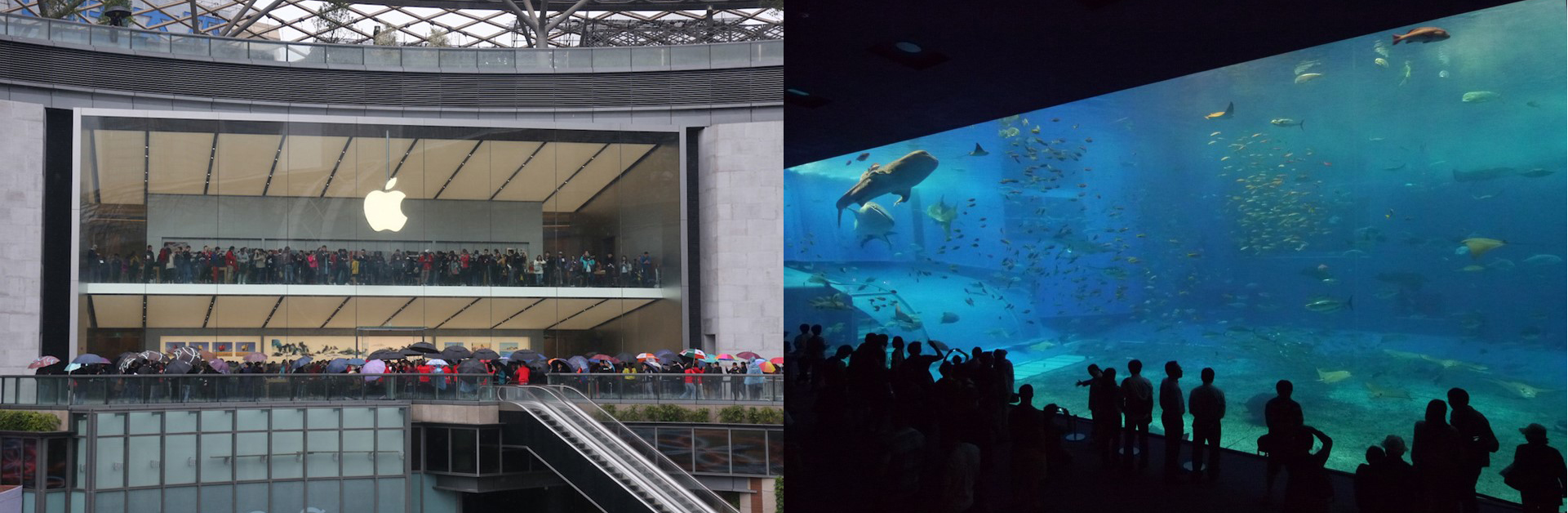 Fig: Apple-Store-Westlake-Hangzhou-China-by-Foster-and-Partners – Okinawa Churaumi Aquarium Japan